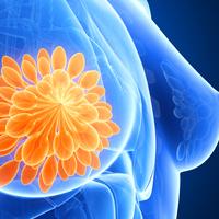 Mémoire épigénétique et glande mammaire